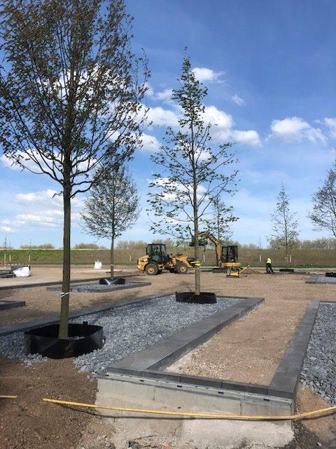 Bäume auf Platz der Landesgartenschau 2020 in Kamp-Lintfort
