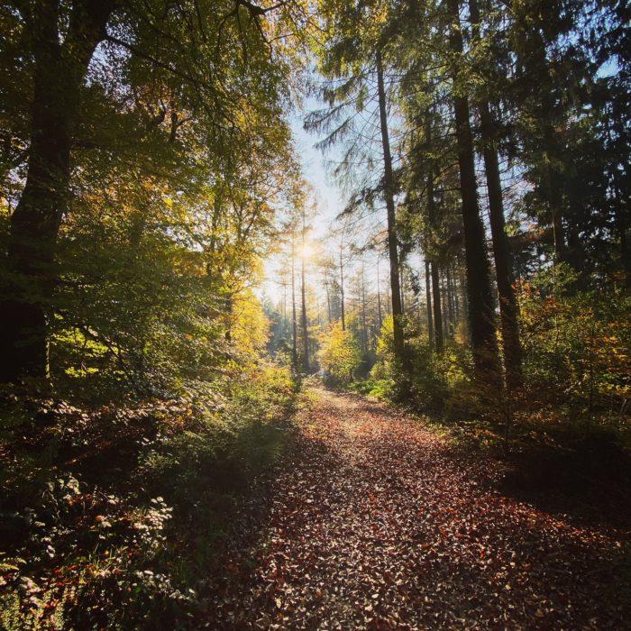 Tüschenwald im Herbst