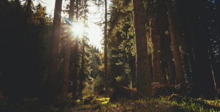 Woche des Waldes: Wo brennts im Wald?