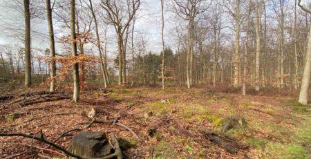 Kahles Waldstück