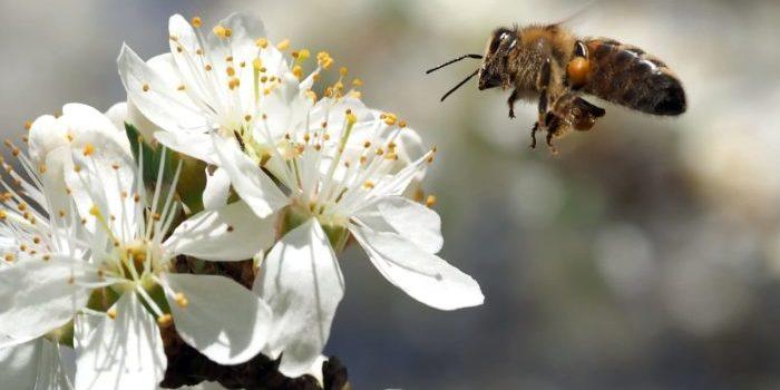 In Kamp-Lintfort setzen sich einige Initiativen für mehr Insektenschutz ein.
